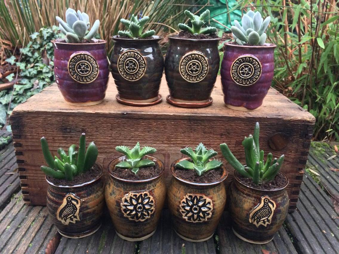Succulent planter selection