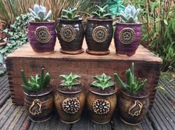 Succulent planter selection