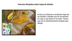Dibujando insectos