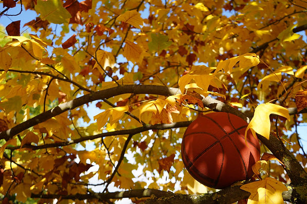 Basketball_Herbst_Baum.JPG