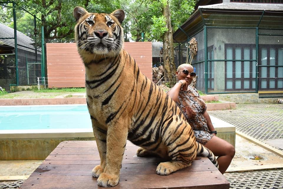 ashawna lane tiger kingdom phucket thail