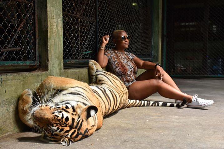 Tiger Kingdom in Phuket, Thailand