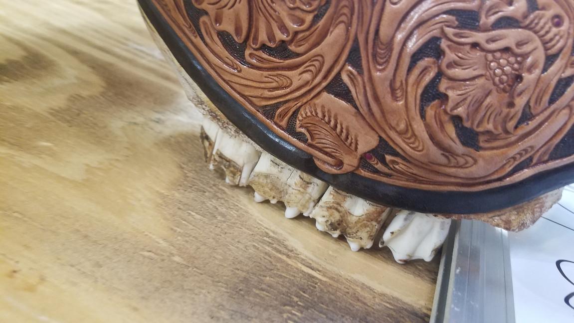 Bull Skullz - Longhorn