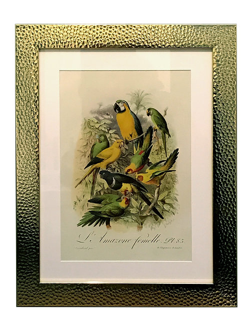 Beaten Gold Coloured Framed Bird Print - Parrots Shipping furniture UK