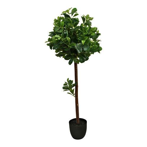 Artificial Tung Oil Ball Tree, 110cm Shipping furniture UK