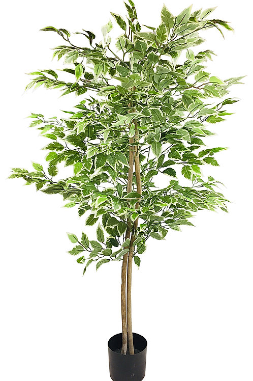 Artificial Ficus Tree With Variegation Leaves 2m Shipping furniture UK