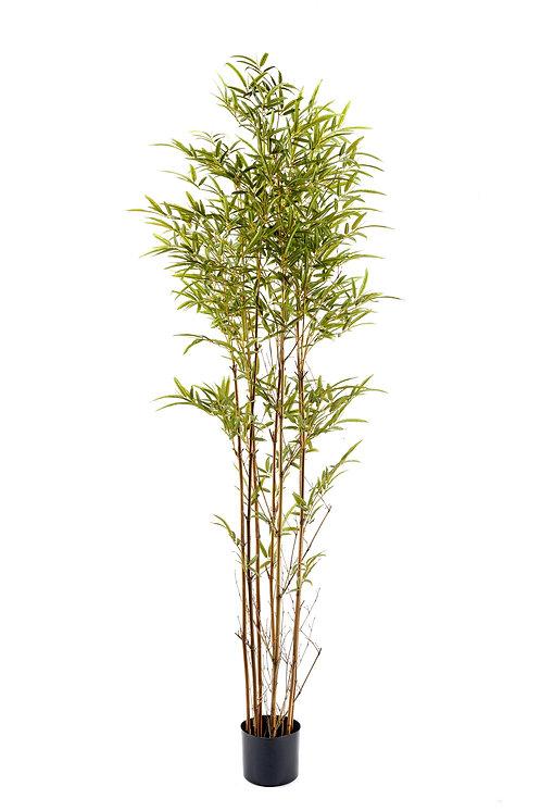 Bamboo Tree 195cm Shipping furniture UK