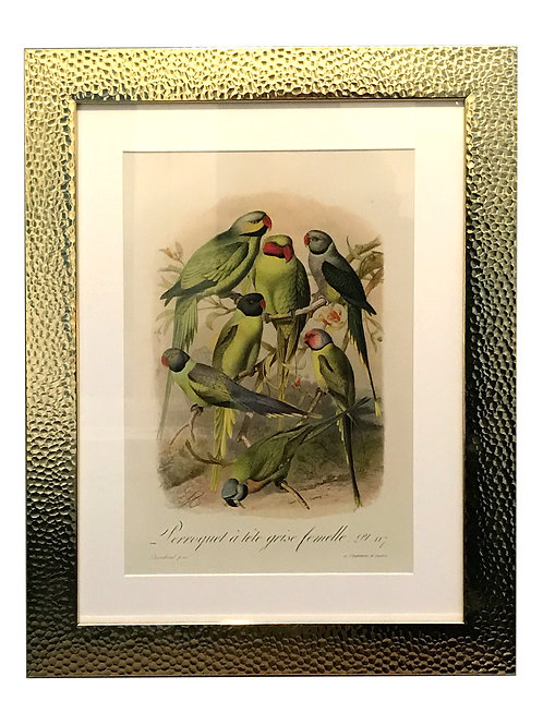 Beaten Gold Coloured Framed Bird Print - Parakeets Shipping furniture UK