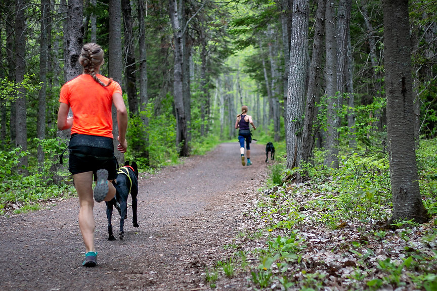 Sarah P & Loki canicross Spring 2020 run