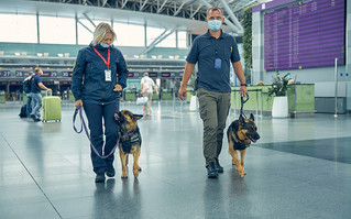 Pareto featured in Facilitate article on Covid-19 sniffer dogs