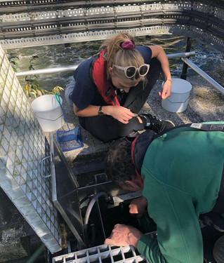 Blog: Pareto engineer sizes up Cockney eels