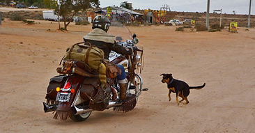dog low res.JPG