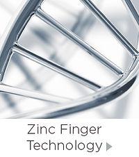 ZincFingers_Tech.jpg