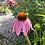 Thumbnail: Echinacea Seed