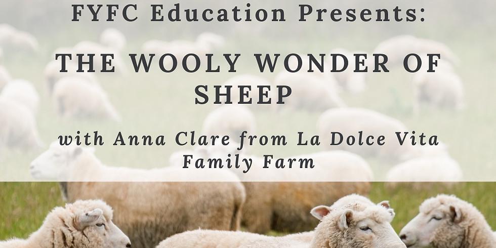 Education Workshop: The Wooly Wonder of Sheep