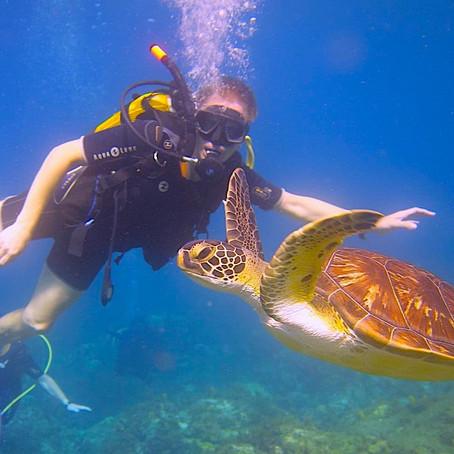 Martinique - a Caribbean dive destination with a twist of oh la la!