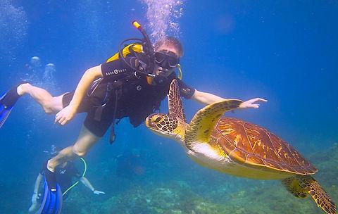 Sea Turtle Martinique - Blog Post .JPG