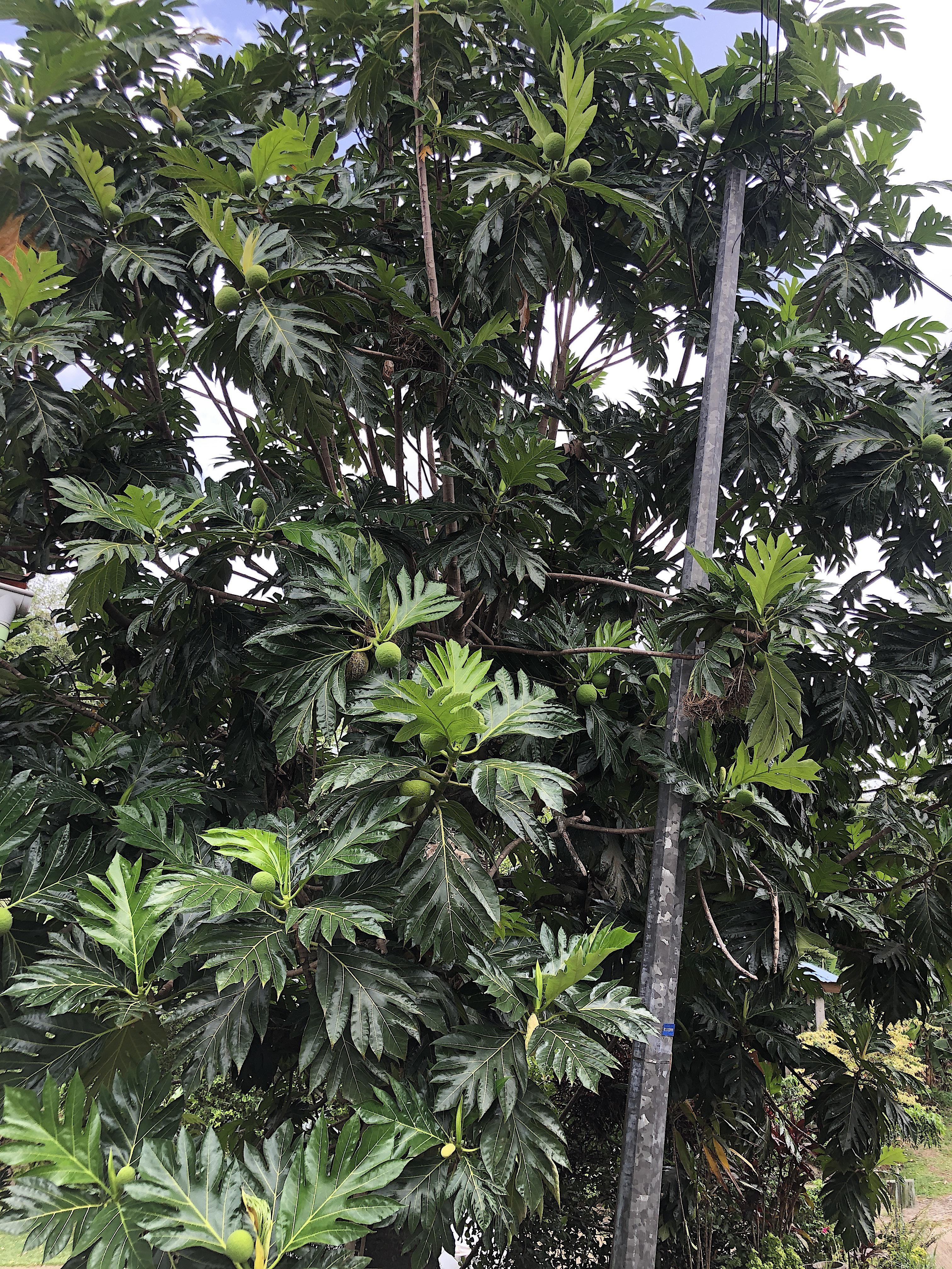 Martinique, Caribbean