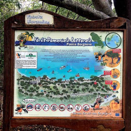 Martinique, à la surface : Pointe Borgnèse