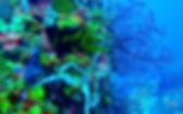 Fauna & Flora - Blog post Martinique .jp