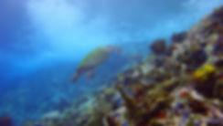 Sea Turtle Diamond Rock Martinique