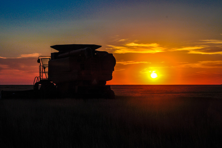 Sunset in the harvest field