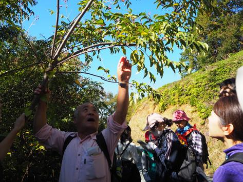 「樹木医と行く森林散策 vol.02ー獅子ヶ鼻公園周辺ー」レポート
