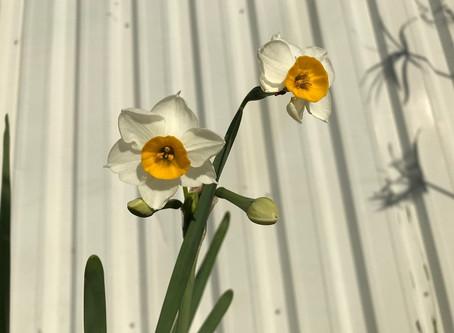植物観察日記-2019年冬 とても重宝する植物