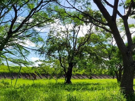 梅雨も明けて、夏到来! 木々の緑も美しい ・・・