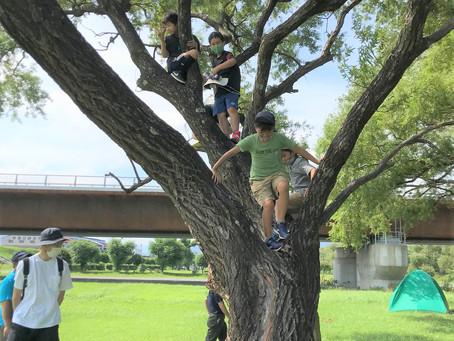 木登り楽しそう!