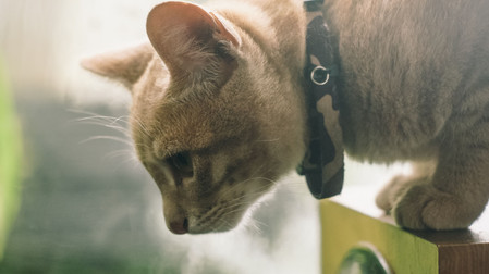 How to solve behavior problems in Cats