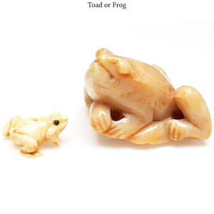 Toad or Frog