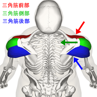三角筋の筋トレメニュー|前部・中部・後部の鍛え方