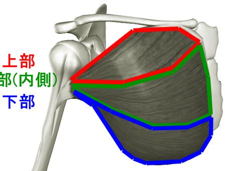 大胸筋の筋トレメニュー|上部・内側・下部の鍛え方をアスリートが解説