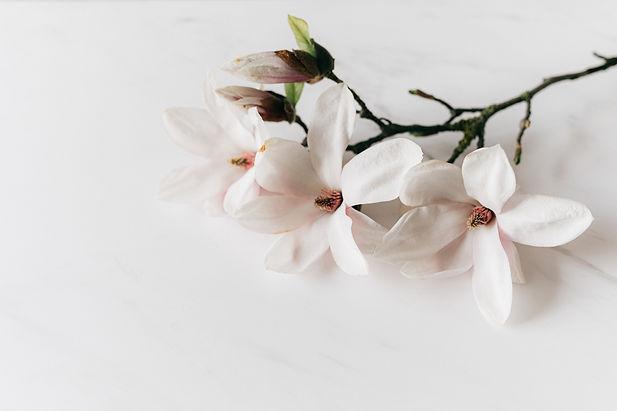 pexels-karolina-grabowska-4210804_edited
