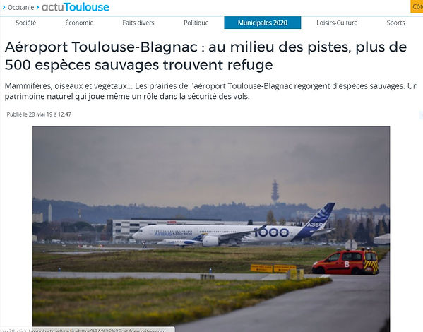 article actu Toulouse.JPG