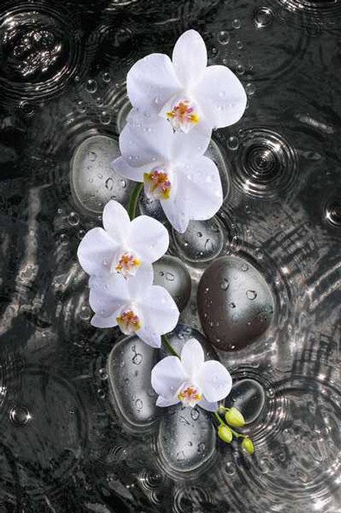 Orchidee schwarz (Platte) ab