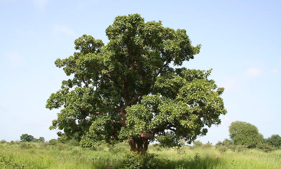 Koop een boom (aanplant)