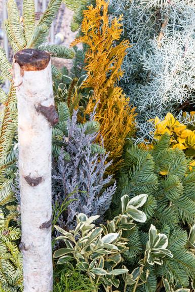 EP_Winter_2019_Mini_Planters_012.jpg