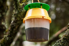 Trap to catch Asian hornet vespa velutina by Pestcontrol-traps