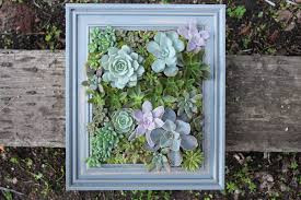 Framed succulent wall display