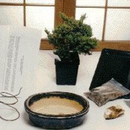 Bonsai Basic Starter Kit - Juniper Procumbens