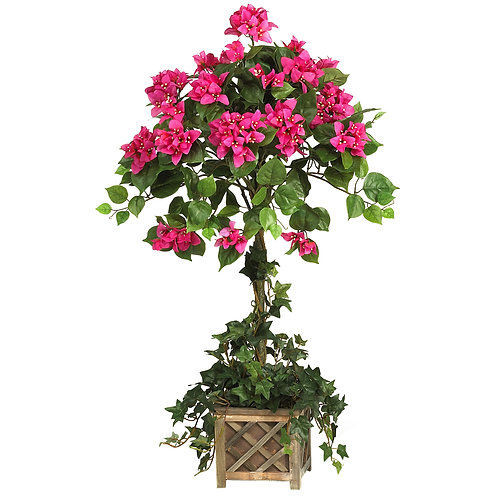 Bougainvillea and Ivy Topiary in Rustic Wooden Planter
