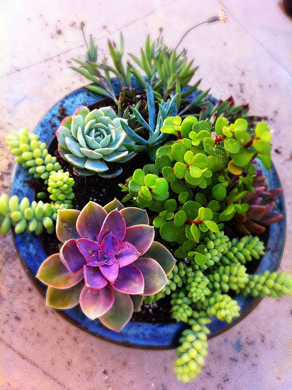 Container arrangement of assorted succulents
