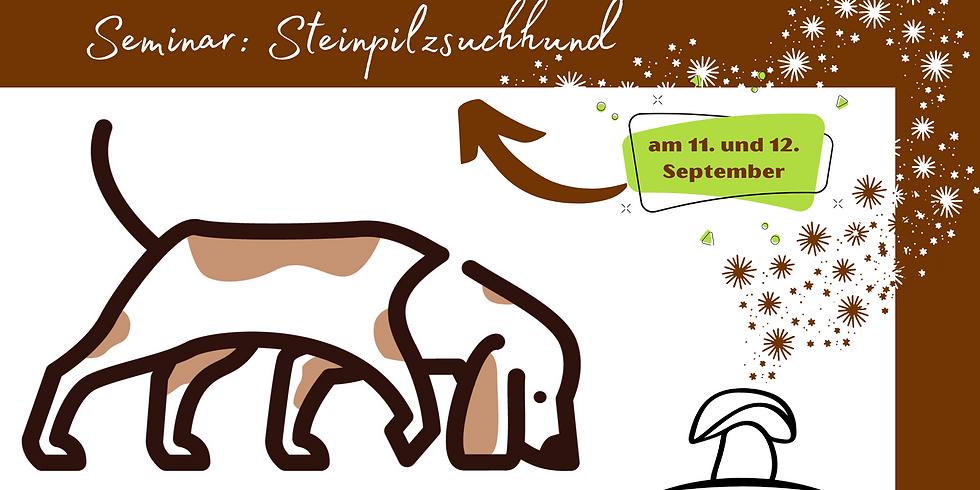 Steinpilzsuchhunde