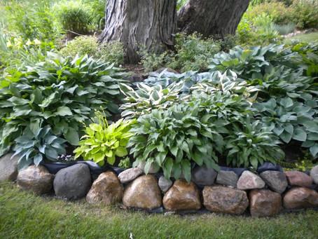 Why mulch? 7 benefits of mulching