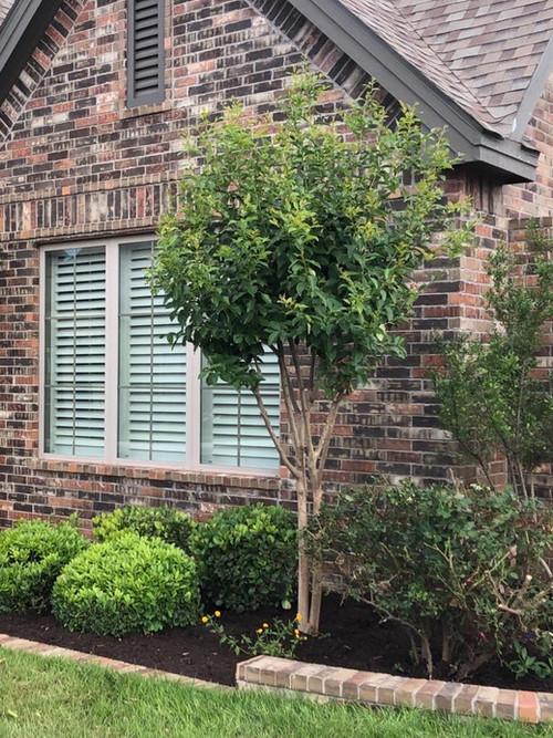 Lawn Care & Maintenance