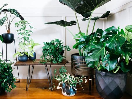 5 ways to keep indoor plants healthy