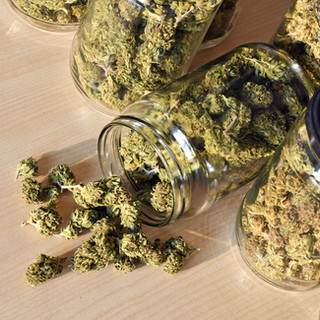 dry-and-trimmed-cannabis-buds-stored-in-