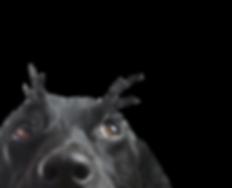 X10 Black Dog
